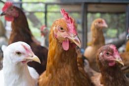Tier-Ertragsschadenversicherung