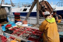 Berufsunfähigkeit Fischer