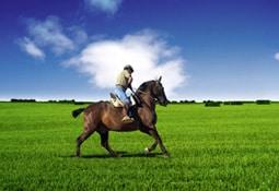Online Vergleich Pferdehaftpflicht