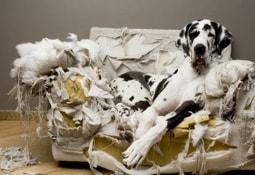 Online Vergleich Hundehaftpflichtversicherung