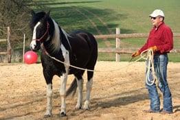 Haftpflichtversicherung Pferdewirt