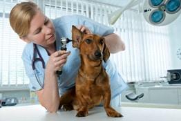 Berufshaftpflicht Tierarzt
