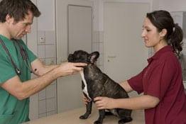 Berufsunfähigkeit Tiermedizinische Fachangestellte